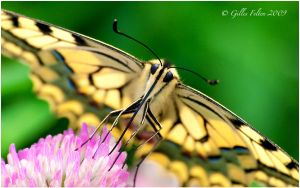 Swallowing Tail by Swordtemper