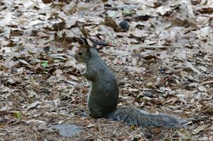 Squirrel (stock)1May 26, 2014 by RustedScrapMetal