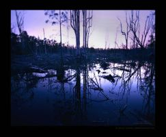 Dusk by gladly