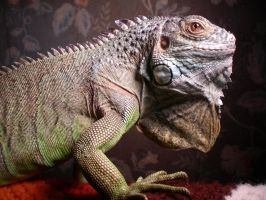 My Green Iguana - Bubba by laughlady99