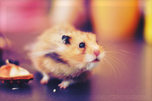 Hamster again by whensummerends