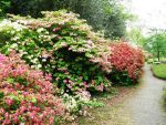 Rhododendron Reverie 1 by JanuaryGuest
