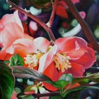 Chinese Quince by Lillemut