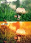 Sunkissed action for photoshop. Free version by ipetrovnin