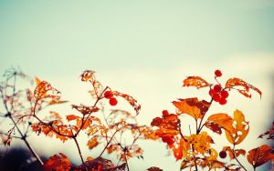 .: Autumns little Details :. by Frank-Beer