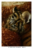 Sweet Tiger-Dreams by Seth890603