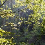 43.52 Forest glade by Musterkatze