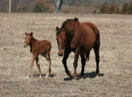 Bay Mare and Foal 3 .:Stock:. by Photopolis