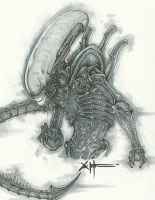 Xenomorph Alien Drone by ChrisOzFulton