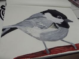 coal tit by ninjastar16
