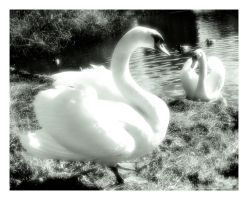 swan of tuonela by reachmehere