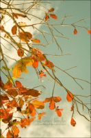 Allusion to Autumn by arhcamt