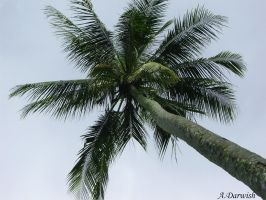 The Palm by DJVue