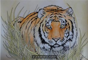 Tiger Watercolour and Pen by Ezekiel-J