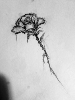 Her Rose by IranG
