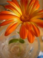 orange flower by MichaelQue