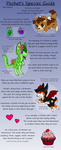 Pochet Information Guide by SammichPup