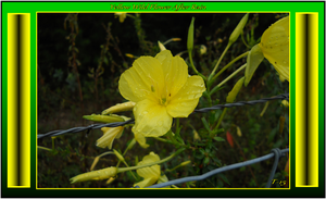 Yellow Florida Wildflower by Taures-15