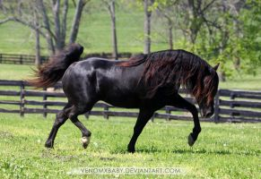 black rmh stallion 1 by venomxbaby