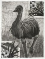 Scribbly Emu by Ms-Silver