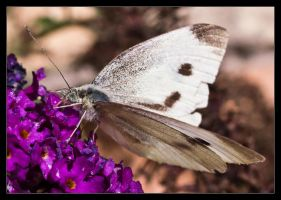 Small White by ExSLR