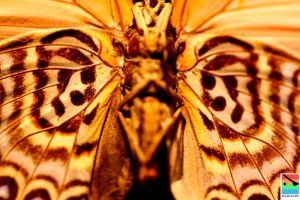 the moth's pattern by mominomi