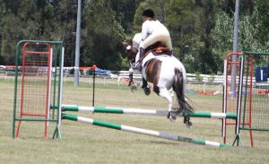 STOCK Showjumping 391 by aussiegal7