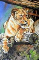 Lioness by Weier1138