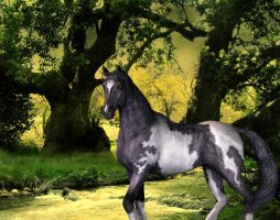 Pinto Horse by ccbig