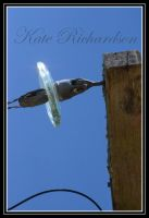 Telegraph pole by DesignKReations