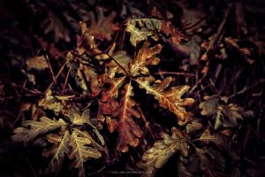 Autumn leafs by Koljan