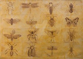 Insect Collection by mcdurfeek