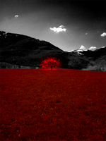 Burning Tree by theShad0w