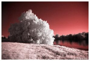 Red Shore by escape-is-at-hand