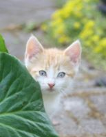 Cat peeps behind the leaf 1 by Frozenbullet