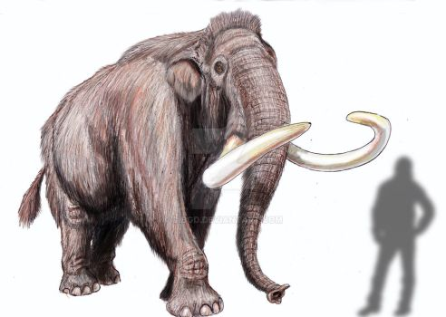 Mammuthus trogontherii chosaricus by DiBgd