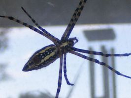 poser spider by grlgeorge