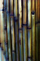 Abstract Bamboo II by MadGardens