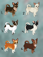 Chihuahua adoptables :TAKEN: by Kultapossu