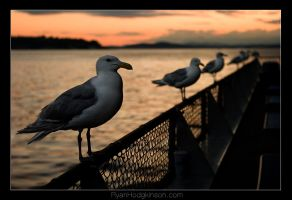 Seagulls by exorp