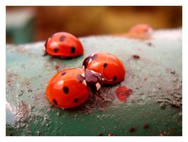 Ladybirds's family by What-is-worth