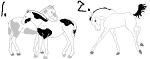 Rodeo Foal Adopts by Japril1000