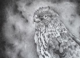 Hawk - finished by drSIDDHI