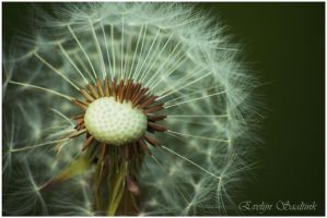 Blow It Away by EvePhotos