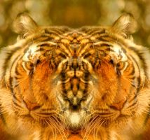 Tiger Face 1 by EyeOfHobus