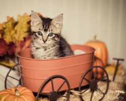 Fall Kitten by KayeShepherd