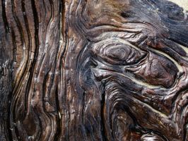 Driftwood 4 -- Sept 2009 by pricecw-stock