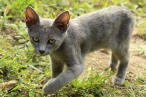 Cat Stock 066 by Malleni-Stock