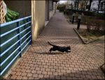 Cat of suburbs by SUDOR
