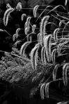 Grasses black and white by coffeenoir